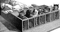 Cat_piano_1883.jpg
