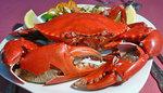 Mud-Crab.jpg