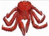 Southern-king-crab.jpg
