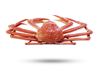 opilio-snow-crab2.png