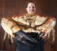 tasmanian_crab.jpg